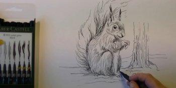 آموزش طراحی سنجاب با مداد و راپید