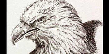 آموزش طراحی عقاب