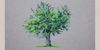 نقاشی درخت با مداد رنگی