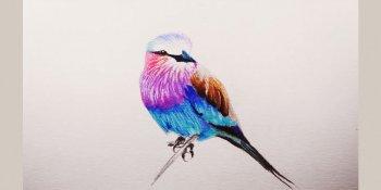 رنگ آمیزی پرنده با مداد رنگی