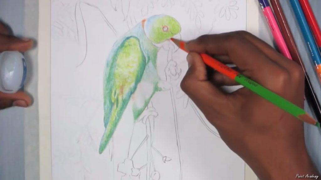 طراحی طوطی