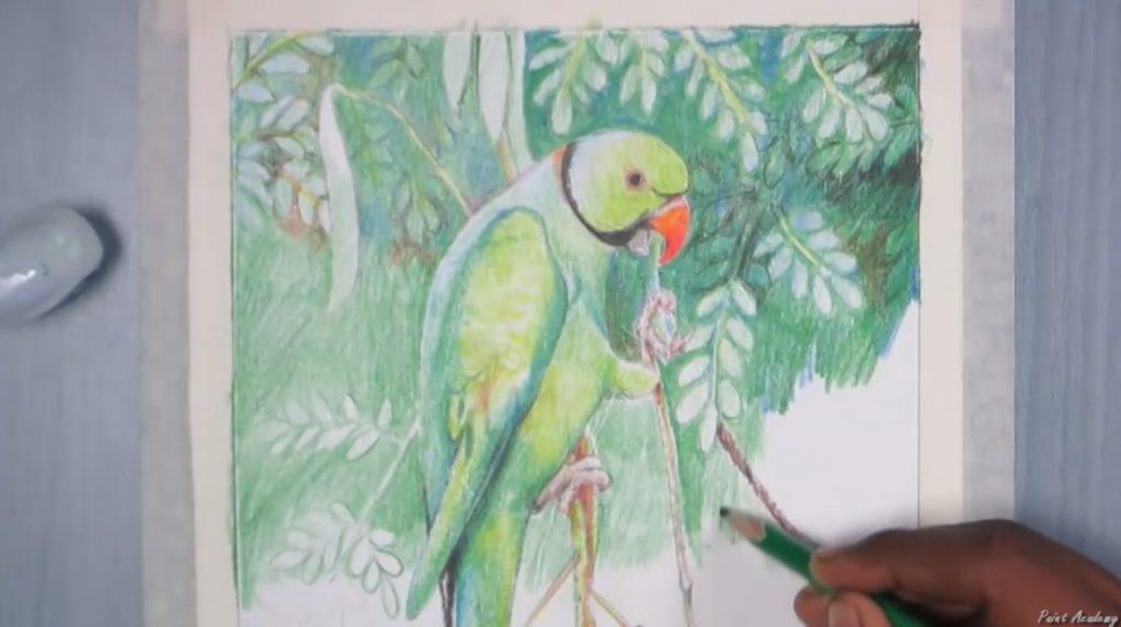 آموزش رنگ آمیزی طوطی