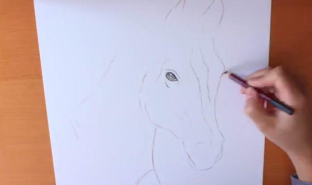 آموزش نقاشی سر اسب