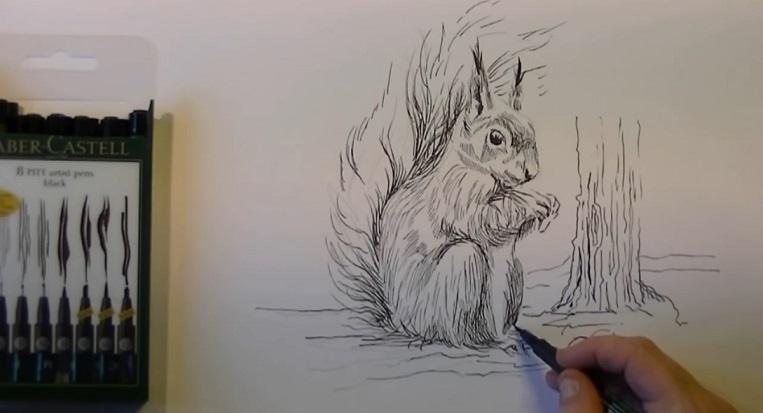 آموزش طراحی سنجاب با مداد