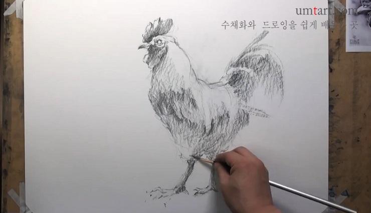 آموزش طراحی خروس با مداد